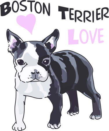 Dog lovers will enjoy this Boston terrier puppy.