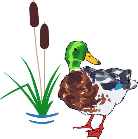 bulrush: Nature lovers will enjoy a mallard duck.