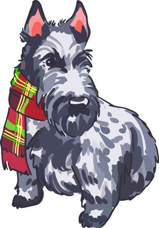 pure bred: A Scottie will amke any dog lover happy.