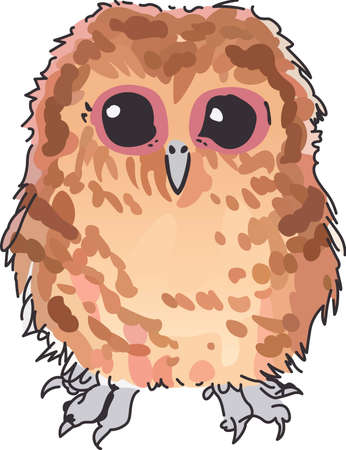 tawny owl: A cute little owl wiil make a bird lovers project special.