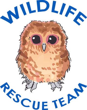 tawny: A cute little owl wiil make a bird lovers project special.