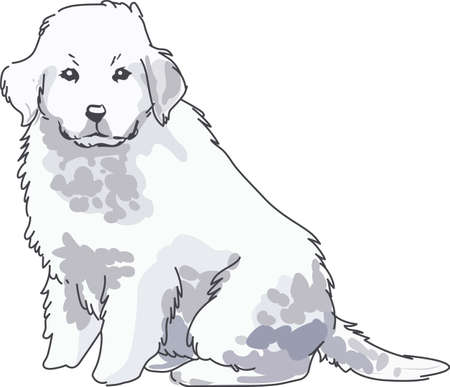A beautiful dog will look nice on a pet project. Ilustrace