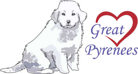 great pyrenees: A beautiful dog will look nice on a pet project. Illustration