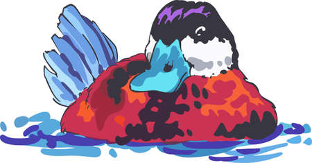 A beautiful duck will be great on a wildlife project. Ilustracja