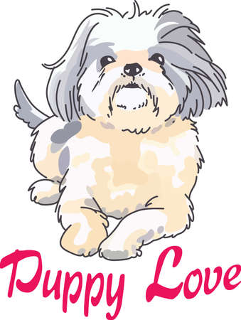 A cute shih tzu is a wonderful addition to any dog lover's project.