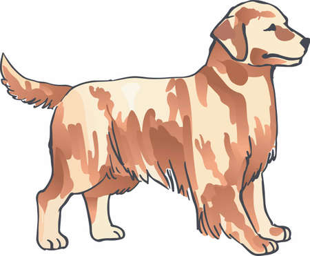 golden retriever: Have a golden retriever with you always with this dog.