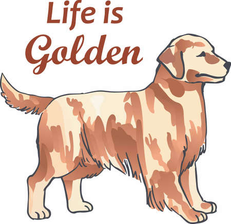 pure bred: Have a golden retriever with you always with this dog.