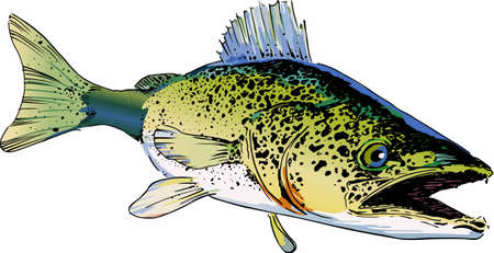 Pick this large walley fish designs for your clothing and accessories. Stock Illustratie