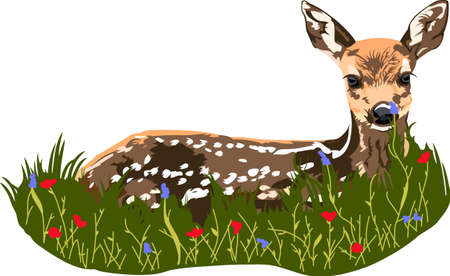 fawn: An adorable fawn in the grass is a wonderful nature design. Illustration