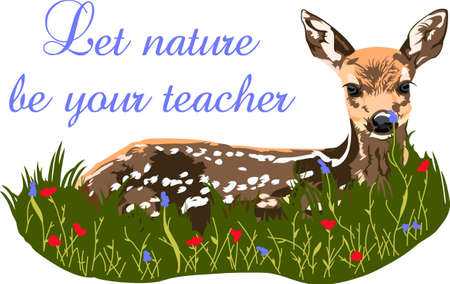 An adorable fawn in the grass is a wonderful nature design. Illustration