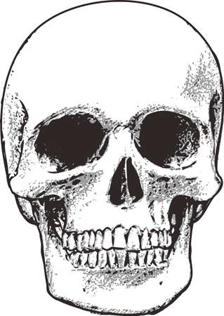 bony: This skull is perfect for Halloween.  Add to your shirt for when you go trick or treating.  Get these designs from Great Notions.