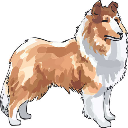 A beautiful collie will make a great design for a dog lovers project.
