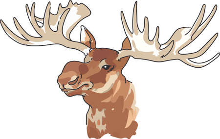 caribou: Nature lovers and hunters will both appreciate the moose head.
