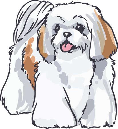 shih tzu: This dog will make a great friend.