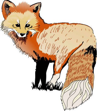 foxy: Use this design in all your jungle theme projects. Illustration