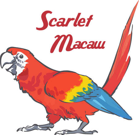 macaw: A lovely scarlet macaw will make a great bird lovers design.