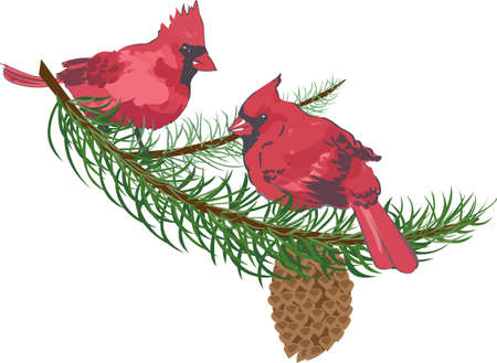 Colorful cardinals make a beautiful holiday design. Illusztráció