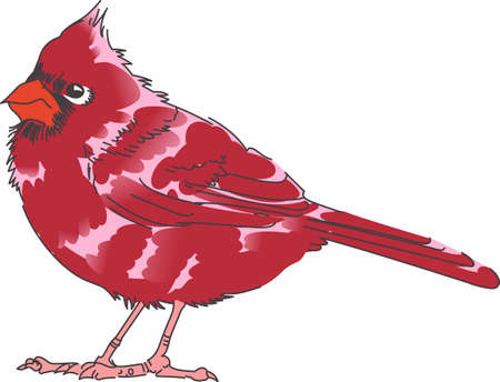 birdie: Send holiday cheers with this beautiful Christmas Cardinal. Pick those designs by Great Notions! Illustration