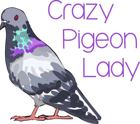 pigeons: If you like pigeons you will like this pretty bird.