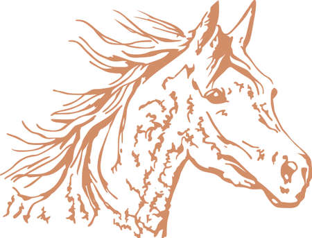 filly: A beautiful Arabian horse will make a great design for any equestrian.