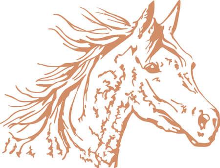 arabian horse: A beautiful Arabian horse will make a great design for any equestrian.