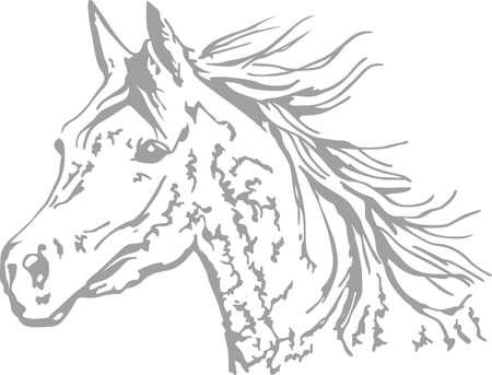 Ein schönes arabisches Pferd ein großer Entwurf für jeden Pferdesport zu machen.