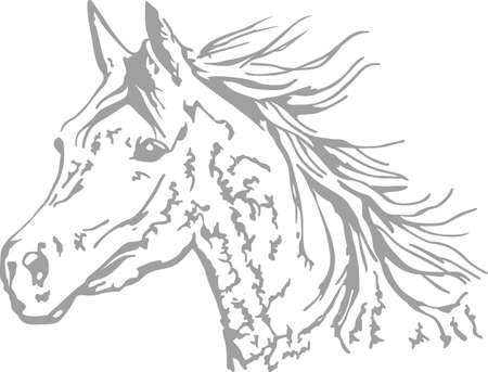 A beautiful Arabian horse will make a great design for any equestrian.