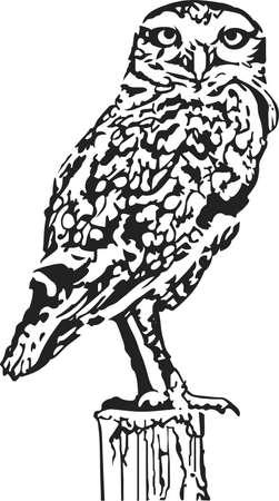 美しいフクロウは、自然愛好家のための素晴らしいデザインです。