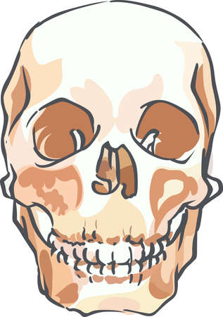 creep: A skull is a great way to express yourself or just creep people out. Illustration