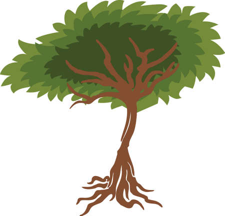 ancestry: A beautiful tree can show off your ancestry.