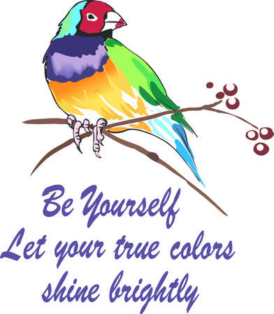 A colorful bird will be perfect for  any bird lover.