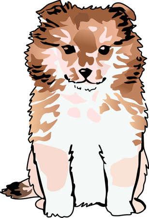 shetlander: Pronk met uw favoriete hond met dit leuke ontwerp. Stock Illustratie