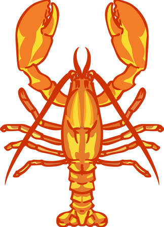 A lobster is great for a beach or food project. 版權商用圖片 - 45449399