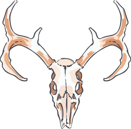 hunters: Hunters can display a great trophy with this deer skull.