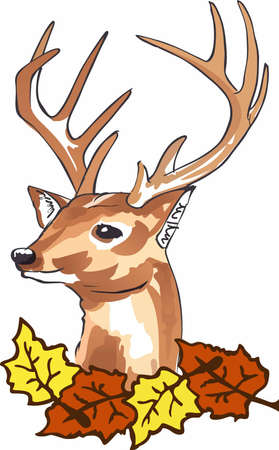 bucks: Welcome the fall season with a beautiful deer head. Illustration