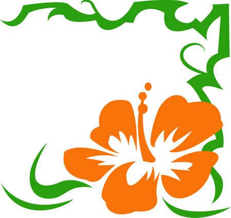 Kom en bezoek het eiland Hawaii! Surfers en strandgangers genieten van het tropische Hawaiiaanse eiland als hun reisbestemming.