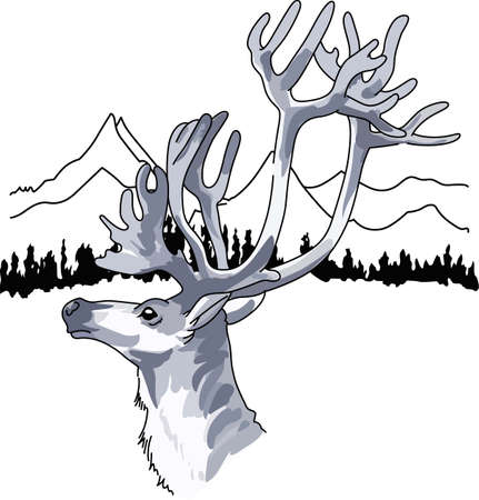 caribou: This beautiful reindeer is a nature lovers dream.