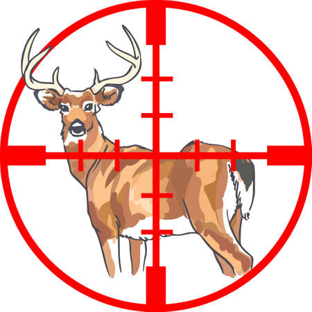 whitetail deer: Hunters will love to have this deer in their sights. Illustration