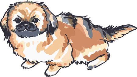 animal lover: Un perrito pequin�s lindo ser� un gran peque�o perro para un amante de los animales. Vectores
