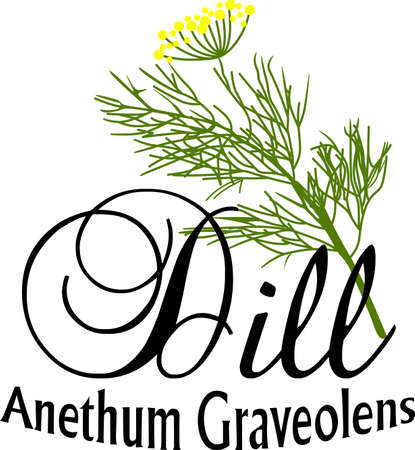 aromatique: Accent votre cuisine avec de belles plantes.
