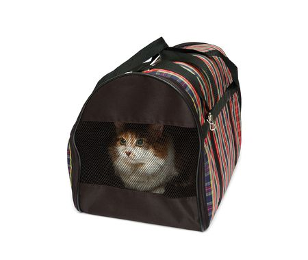 cat carrier: Pet carrier with cat isolated over white background