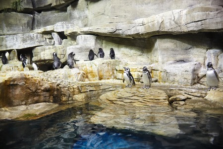 aviary: Penguins sitting on rock in zoo Stock Photo