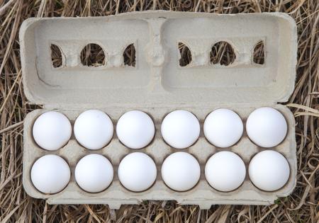 Dozen egg in carton box