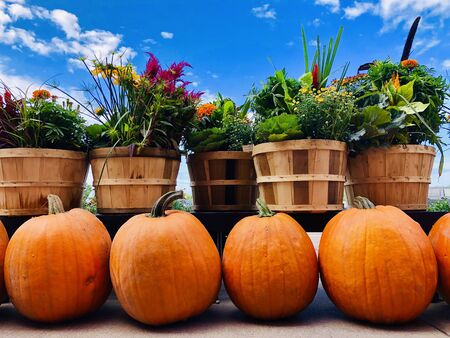 Close-up of pumpkins and wildflowers in wooden pots on background of blue cloudy sky. Harvest, Thanksgiving day, Halloween