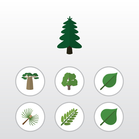 aspen leaf: Flat Icon Natural Set Of Baobab, Leaves, Rosemary And Other Vector Objects. Also Includes Spruce, Hickory, Park Elements.