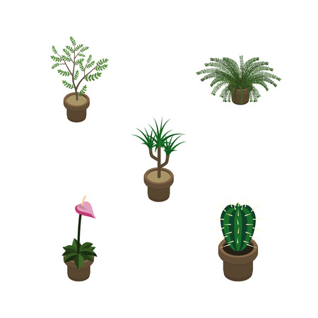 peyote: Isometric Houseplant Set Of Houseplant, Plant, Peyote And Other Vector Objects. Also Includes Plant, Cactus, Flower Elements.