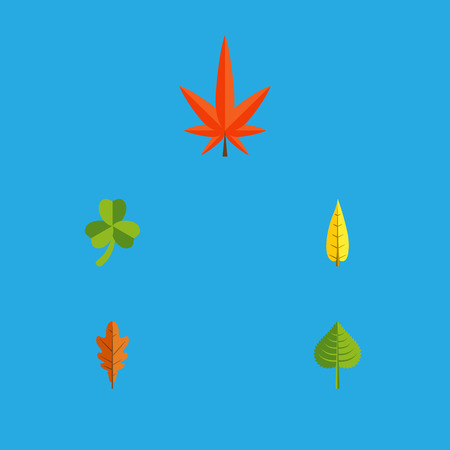 Flat Icon Maple Set Of Aspen, Hickory, Maple And Other Vector Objects. Also Includes Hickory, Leaf, Alder Elements. Illustration