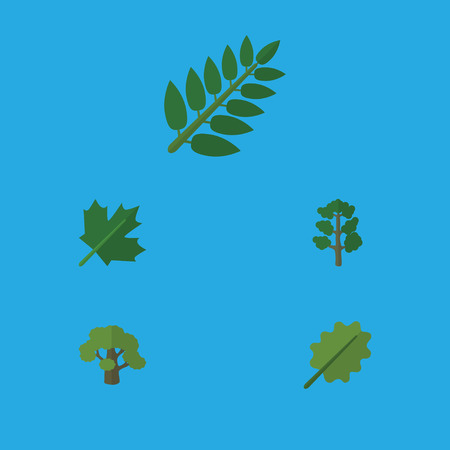 alder tree: Flat Icon Ecology Set Of Forest, Acacia Leaf, Oaken And Other Vector Objects. Also Includes Leaves, Alder, Tree Elements.