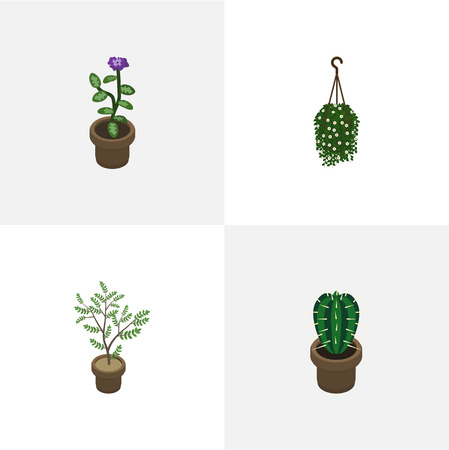 Hängeel Blumen isometric houseplant set of blossom plant fern and other vector