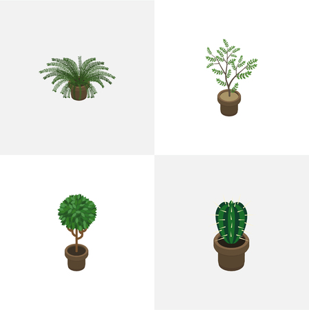 peyote: Isometric Houseplant Set Of Tree, Peyote, Plant And Other Vector Objects. Also Includes Fern, Pot, Plant Elements.